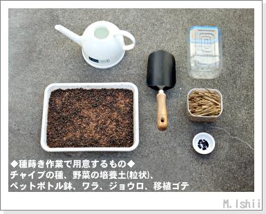 ハーブのペット栽培(チャイブ)03