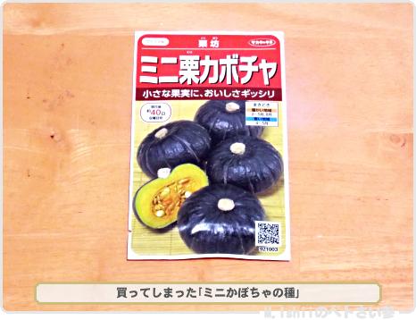 ミニかぼちゃの種