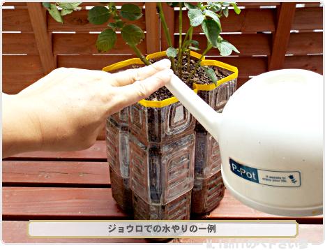 ジャガイモの試験栽培27