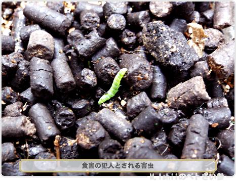 ペトさい(正月菜・改)23