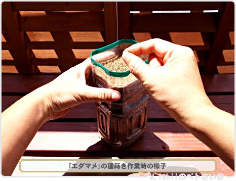 エダマメ栽培の秘策01