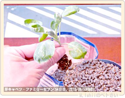 ペトさい(芽キャベツ)59