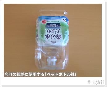 ブロッコリーの芯栽培03
