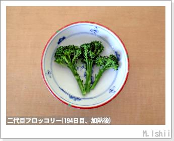 ブロッコリーの芯栽培46