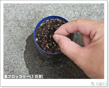 ペット栽培III(茎ブロッコリー)03