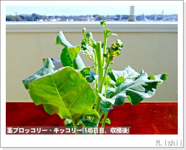 ペット栽培III(茎ブロッコリー)50