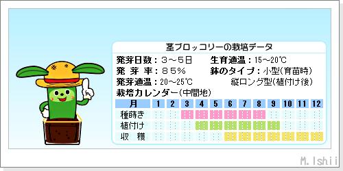 ペット栽培III(茎ブロッコリー・改)02