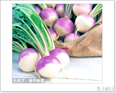 ペット栽培III(小カブ・あやめ雪)01