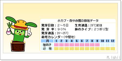 ペット栽培III(小カブ・あやめ雪)02