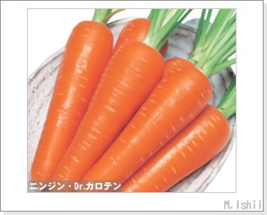 ペット栽培III(ニンジン)01