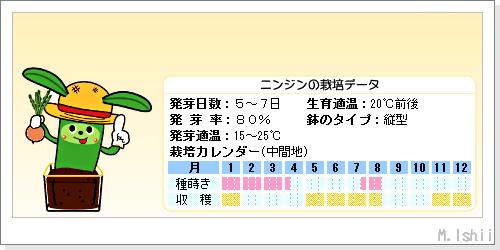 ペット栽培III(ニンジン)02