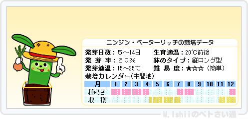 ペトさい(ニンジン)16