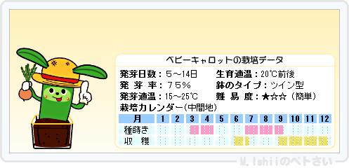 ペトさい(ベビーキャロット)09