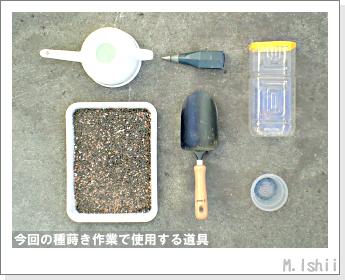 ペット栽培・試験録(ミニ大根)04