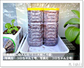 ペット栽培・試験録(ミニ大根)06