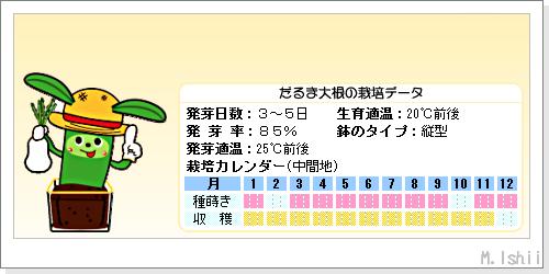 ペット栽培III(だるま大根・改)03