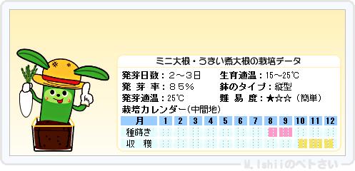 ペトさい(ミニ大根)20