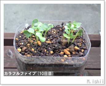 ペット栽培II(カラフルファイブ)05