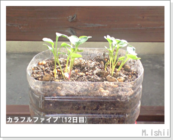 ペット栽培II(カラフルファイブ)06
