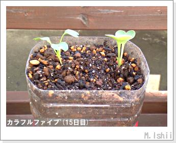 ペット栽培II(カラフルファイブ)07