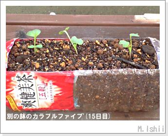 ペット栽培II(カラフルファイブ)08