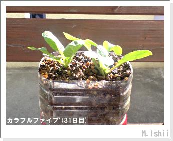 ペット栽培II(カラフルファイブ)12