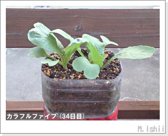 ペット栽培II(カラフルファイブ)13