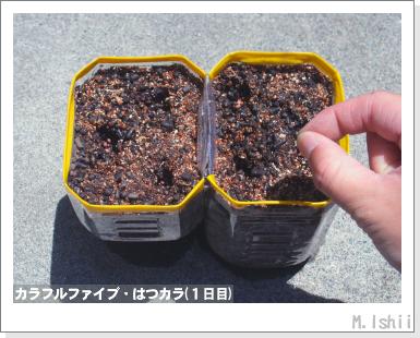 ペット栽培III(カラフルファイブ)05