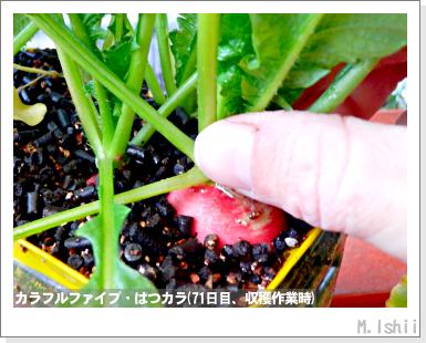 ペット栽培III(カラフルファイブ)20