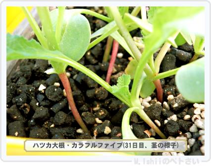 ペトさい(カラフルファイブ)23