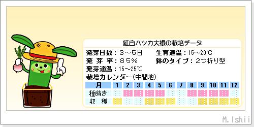 ペット栽培III(紅白ハツカ大根)02