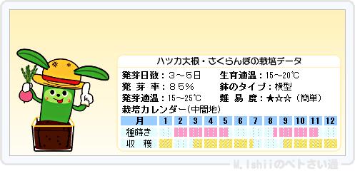 ペトさい(ハツカ大根)13