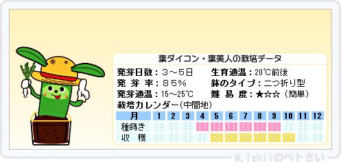 ペトさい(葉ダイコン)10