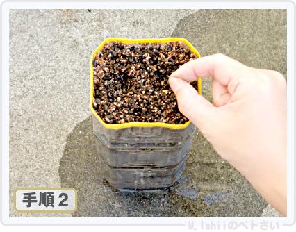 ペトさい(サラダごぼう)04