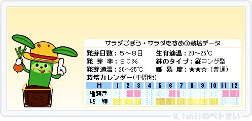 ペトさい(サラダごぼう)11
