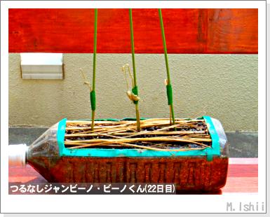 ペット栽培・試験録(つるなしジャンビーノ)48