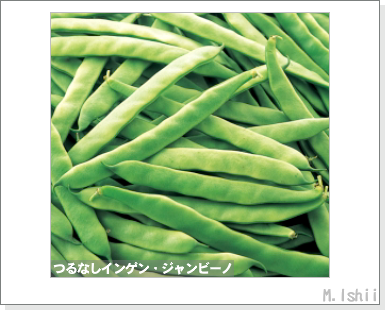ペット栽培III(つるなしインゲン・改)02