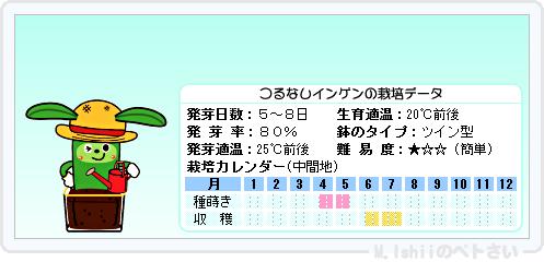 ペトさい(つるなしインゲン)18