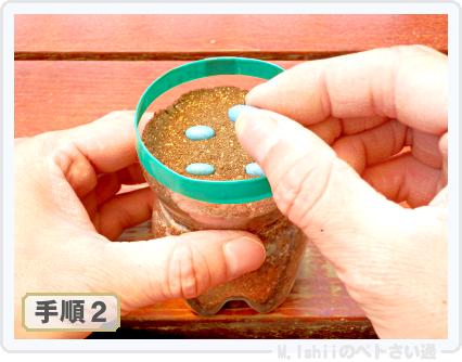 ペトさい(つるなしインゲン・改)07