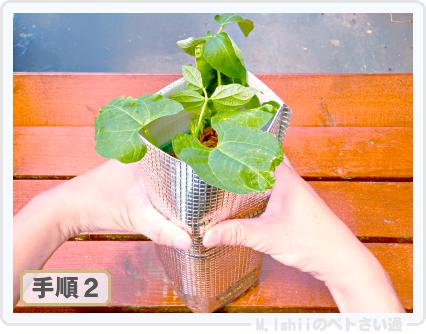 ペトさい(つるなしインゲン・改)29
