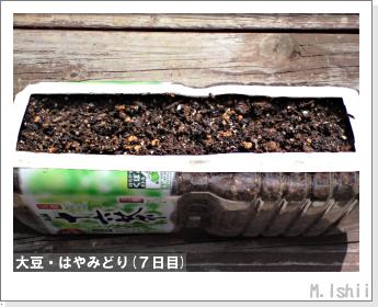 ペット栽培II(大豆・はやみどり)04