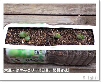 ペット栽培II(大豆・はやみどり)07