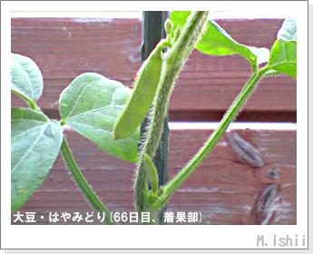 ペット栽培II(大豆・はやみどり)18