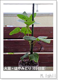 ペット栽培II(大豆・はやみどり)19