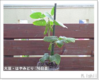 ペット栽培II(大豆・はやみどり)20