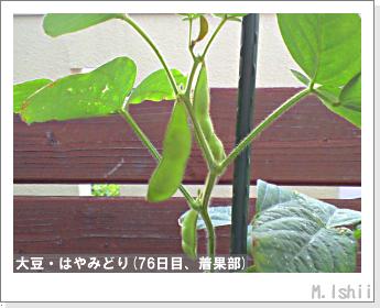 ペット栽培II(大豆・はやみどり)21