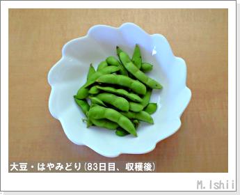 ペット栽培II(大豆・はやみどり)23