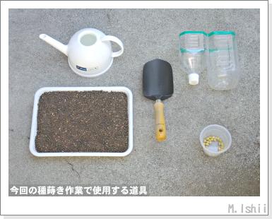 ペット栽培III(ダイズ)02