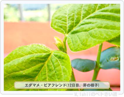 ペトさい(エダマメR)16