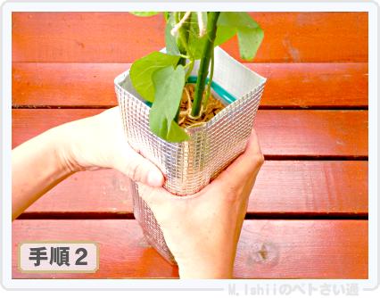 ペトさい(エダマメR)31